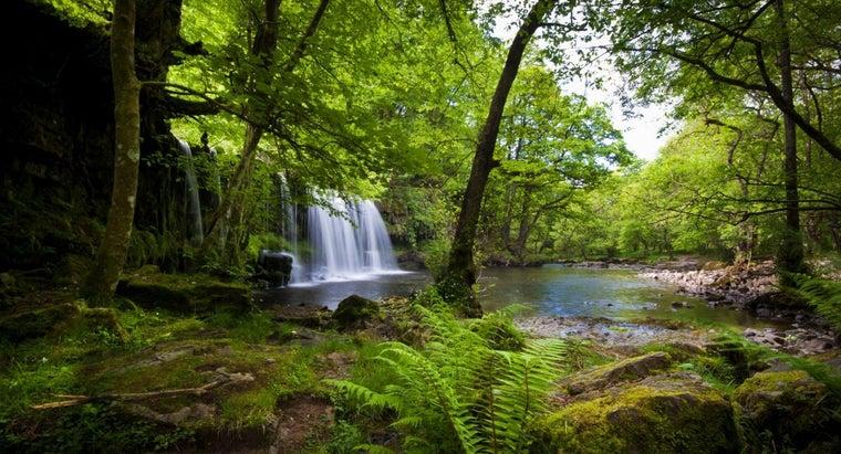 food-chain-tropical-rainforest