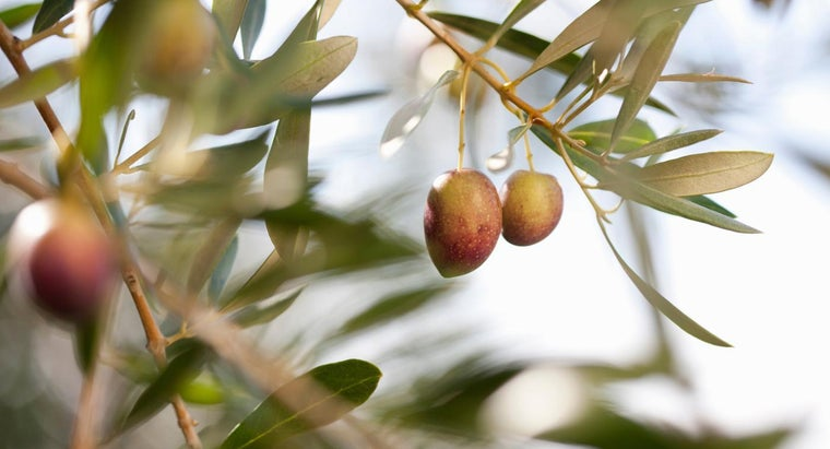 food-group-olive-belong