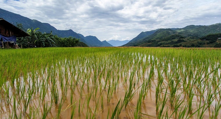 food-group-rice