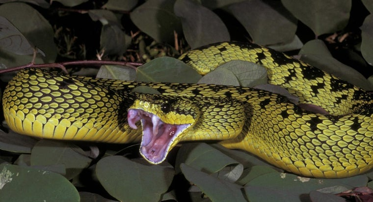 food-viper-snake-eat