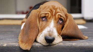 Which Foods Cause Vomiting and Diarrhea in Dogs?