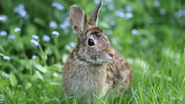 What Foods Provide the Most Nutrients for Wild Rabbits?