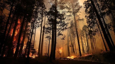 How Is a Forest Fire Put Out?