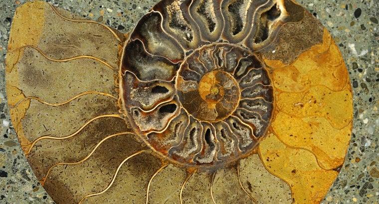 fossil-record