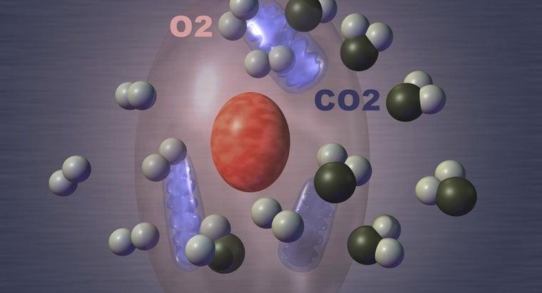 four-steps-cellular-respiration