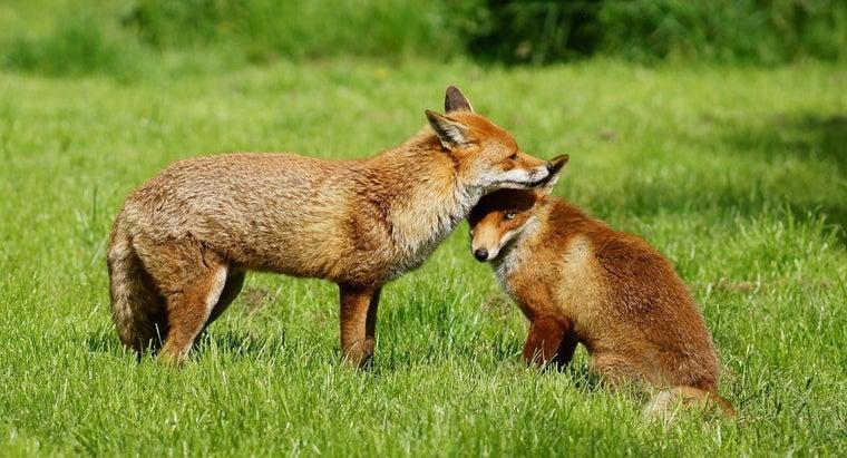 fox-live