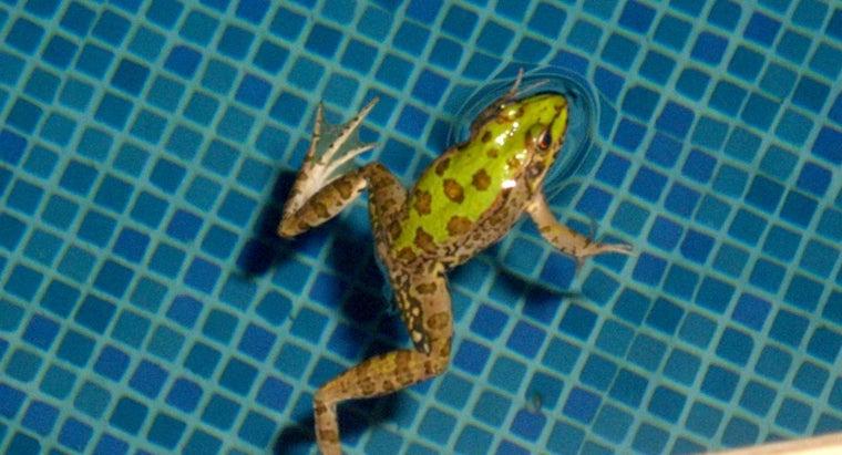frog-breathe