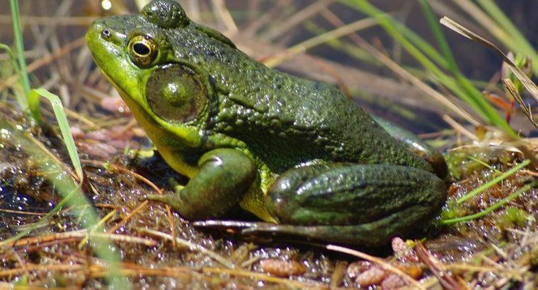 frog-s-scientific-name