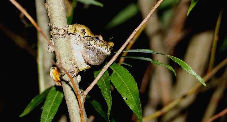 frogs-croak-night