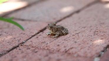 How Often Do Frogs Eat?