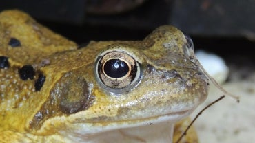 Where Do Frogs Live?