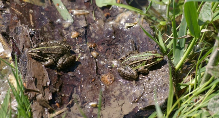 frogs-mate