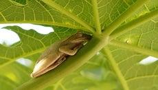 How Do Frogs Sleep?