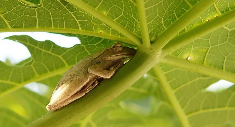 frogs-sleep