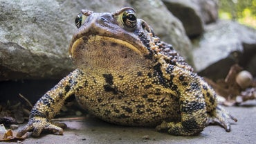 What Do Frogs and Toads Eat?