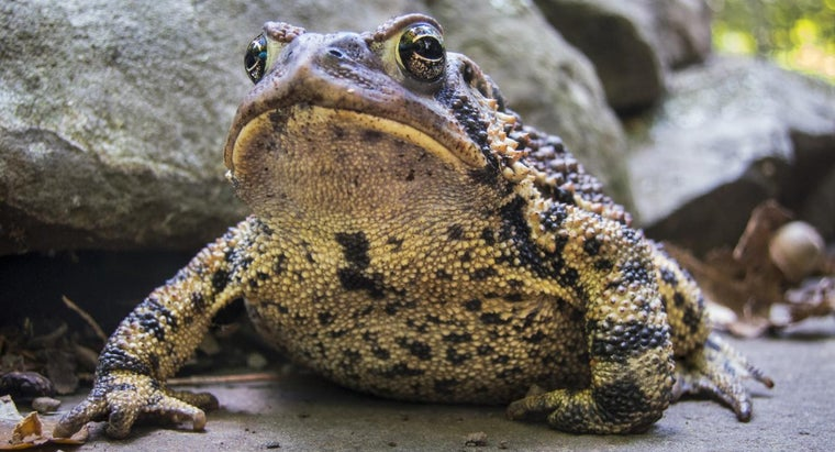 frogs-toads-eat
