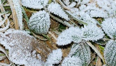 What Is a Frost Line?