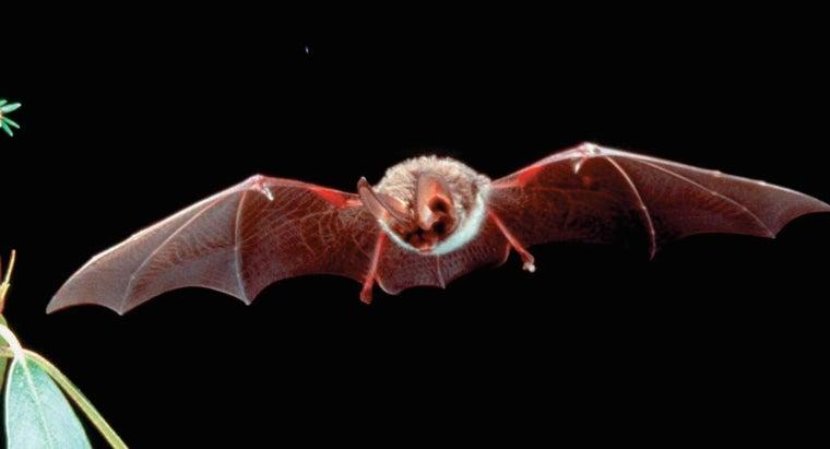 fruit-bats-live