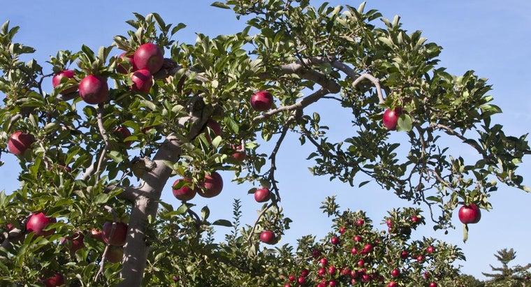 fruit-tree-identification-guide