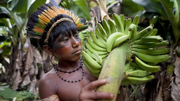 What Fruits Grow in the Amazon Rainforest?