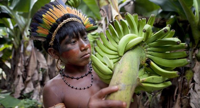 fruits-grow-amazon-rainforest