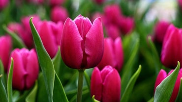 What Are Some Fun Facts About Spring?