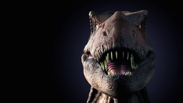 What Are Some Fun Facts About the T. Rex for Kids?