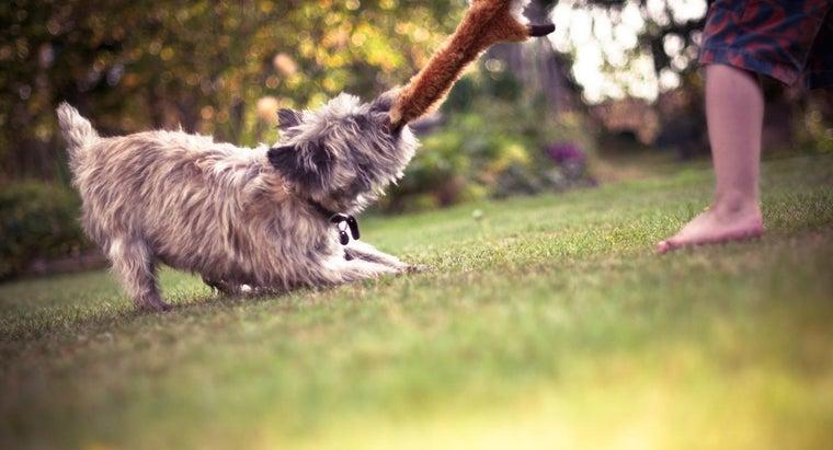 fun-things-dog