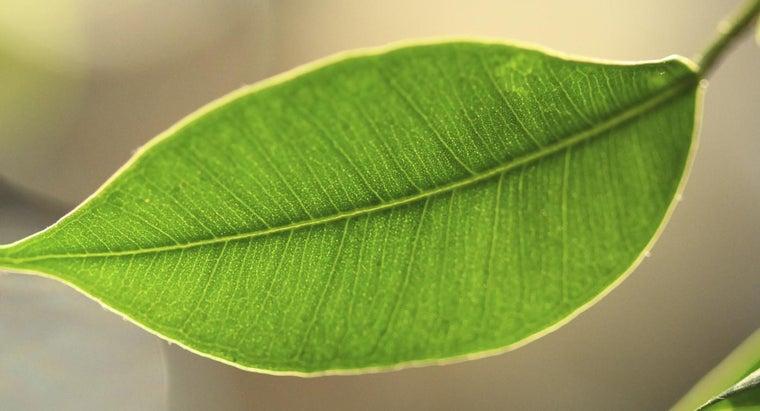 function-chlorophyll