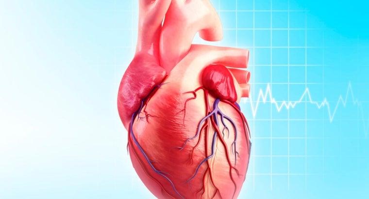 function-circumflex-artery