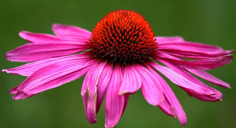 function-flower-petals