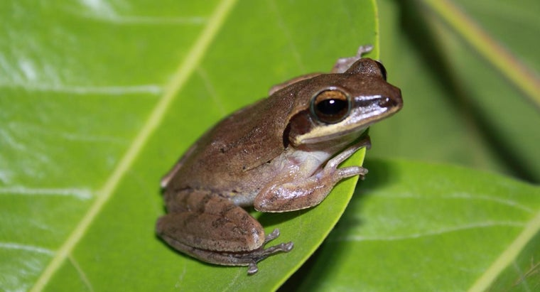 function-oviducts-frogs