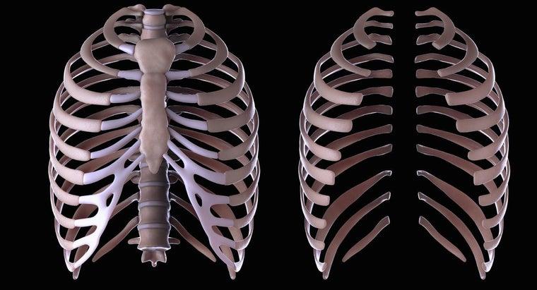 function-rib-cage