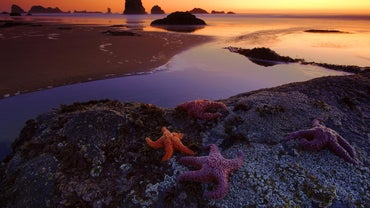 What Is the Function of a Starfish's Spines?