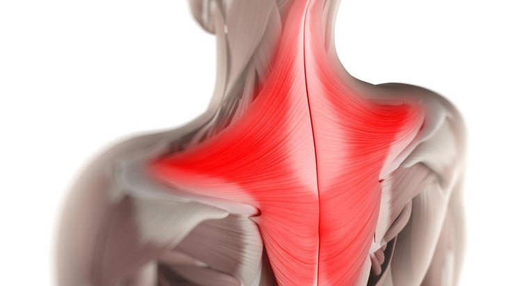function-trapezius-muscle