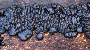 What Are Fungi That Absorb Food From Decaying Organic Matter?