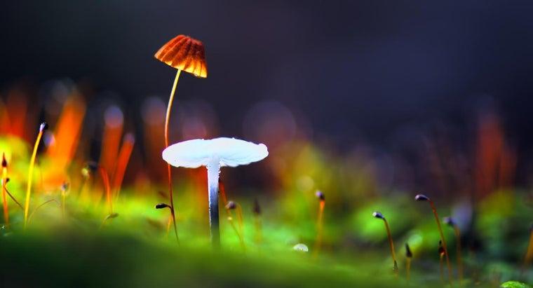 fungi-plants-similar