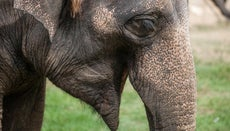 What Are Some Funny Elephant Jokes?