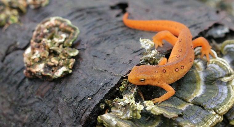 general-characteristics-amphibians