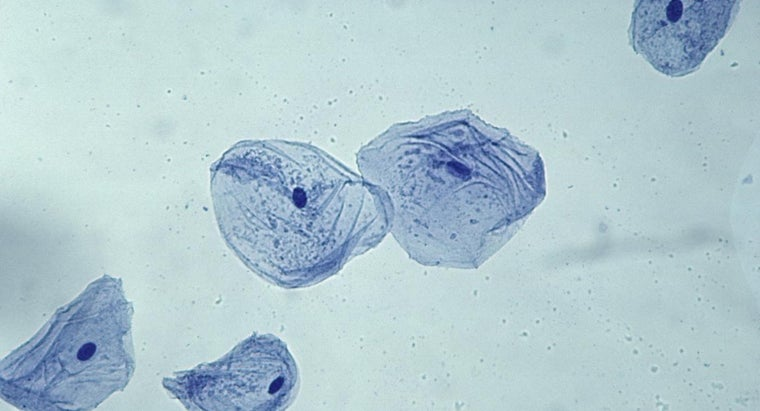 What Is The General Shape Of A Cheek Cell Reference Com