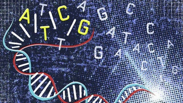 Where Are Genes Located?
