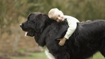 What Are Some Gentle Giant Dogs?