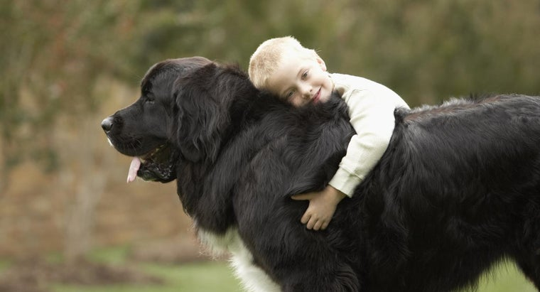 gentle-giant-dogs