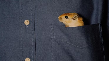 Why Are Gerbils Illegal in California?
