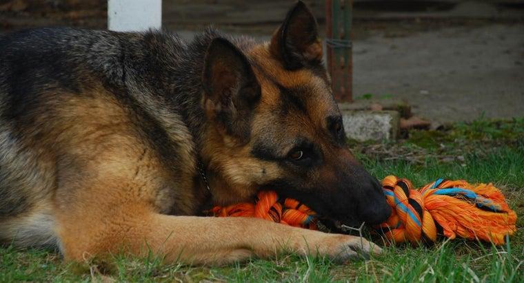german-shepherd-games