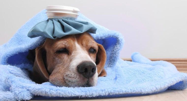 give-dog-fever