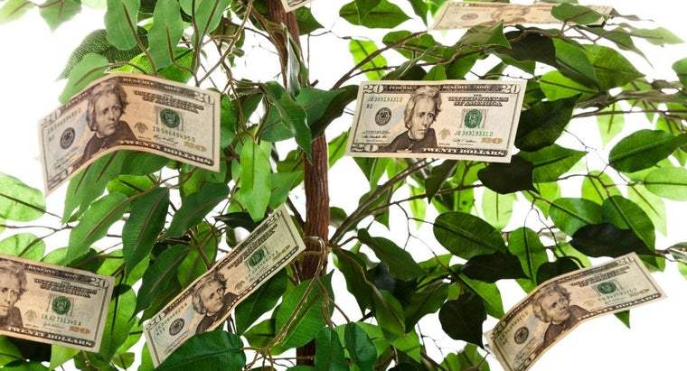 give-money-tree-gift