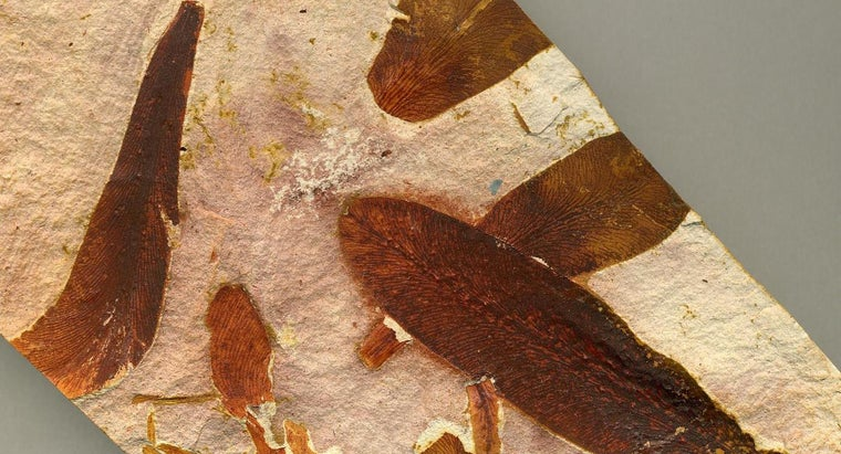 glossopteris-fossils-found