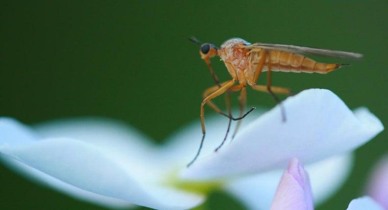 gnats-eat