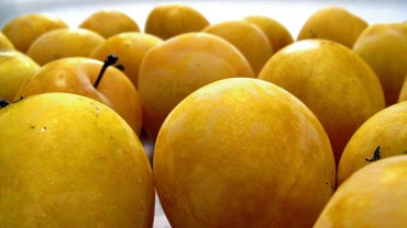 What Is a Golden Plum?